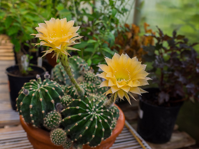 Learn About Plants Through Upcoming Programs at the United States Botanic Garden
